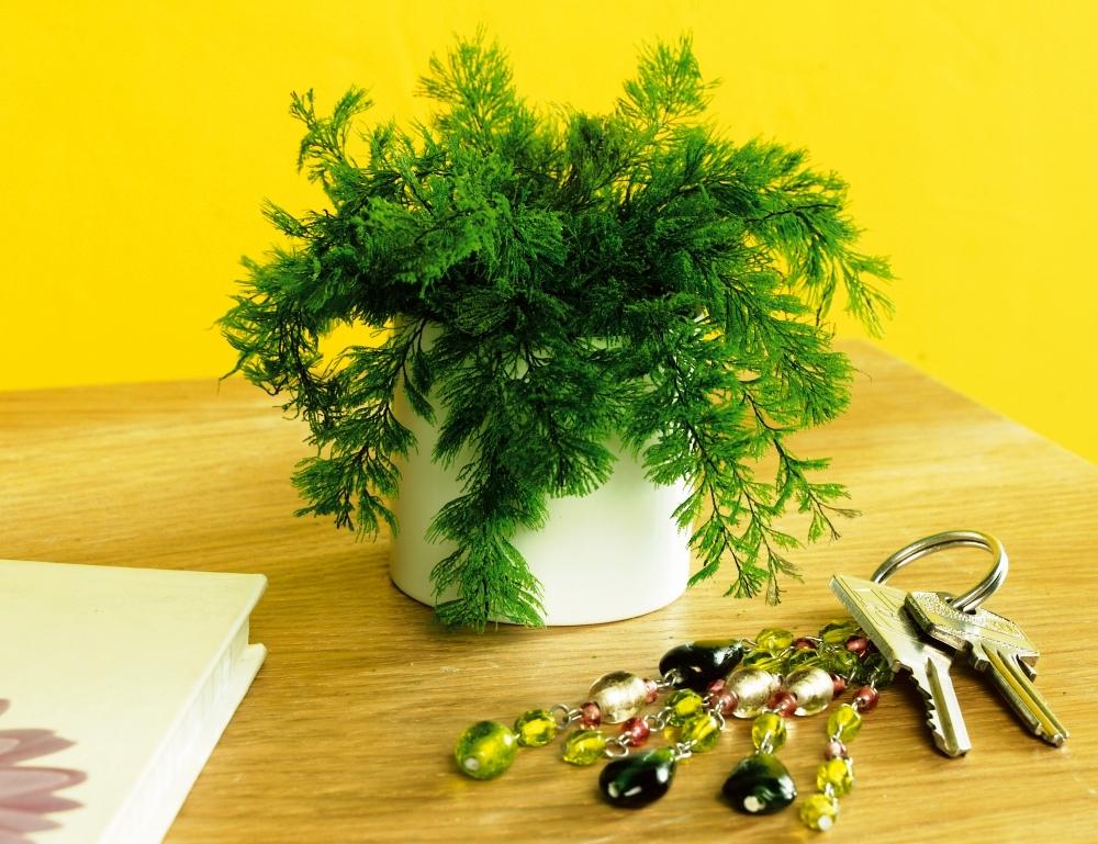 Les plantes anti-lmoustiques, c'est une légende ou pas ? allez on vous dit si ça marche