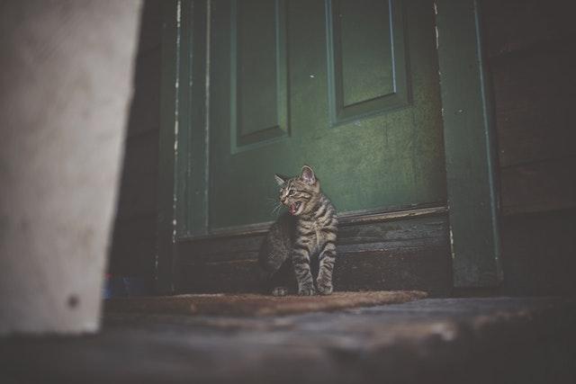 Un chat qui parait tout de même bien enervé