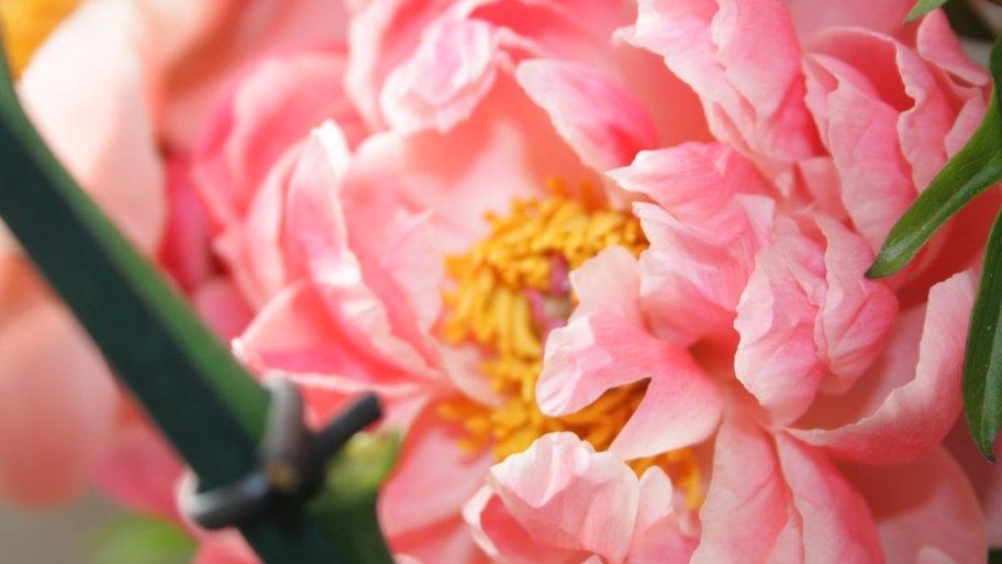 La pivoine: un très joli bouquet décoratif pour votre maison