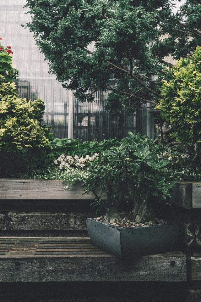 ah le bonsai ! petite arbuste magnifique venu tout droit d'asie