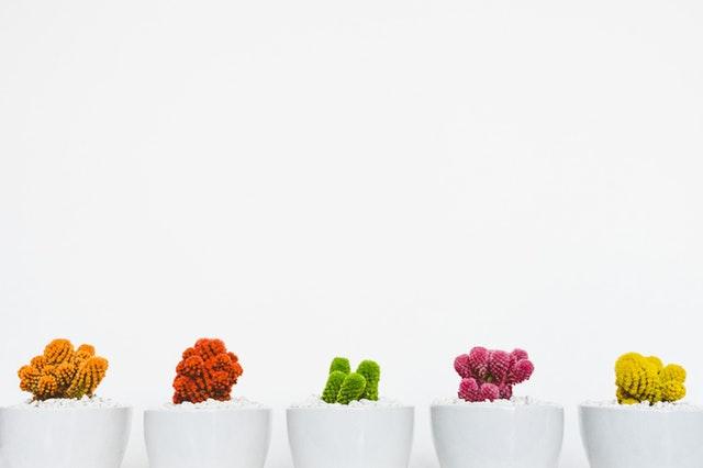 Le bonsaï tout ce que devez savoir avant d'acheter.