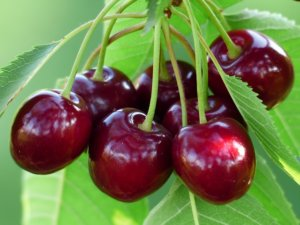 Bien choisir le bon Arbre Fruitier pour un beau jardin