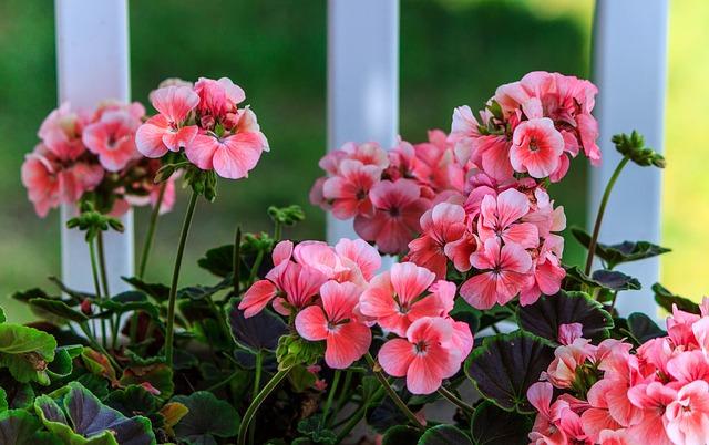 Rien de tel que le jardinage pour personnaliser sa déco d'extérieur