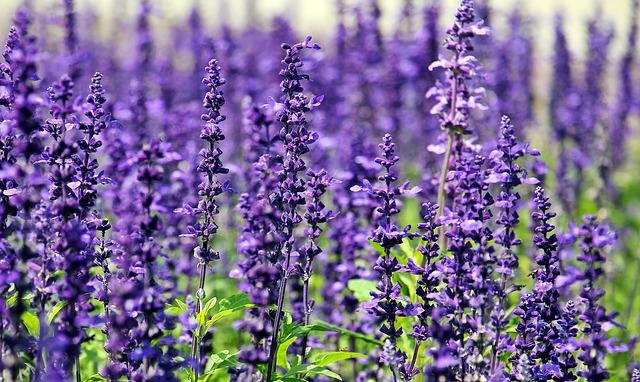 Comment connaître les bonnes plantes pour avoir un beau jardin toute l'année? Astuce pour bien fleurir son jardin