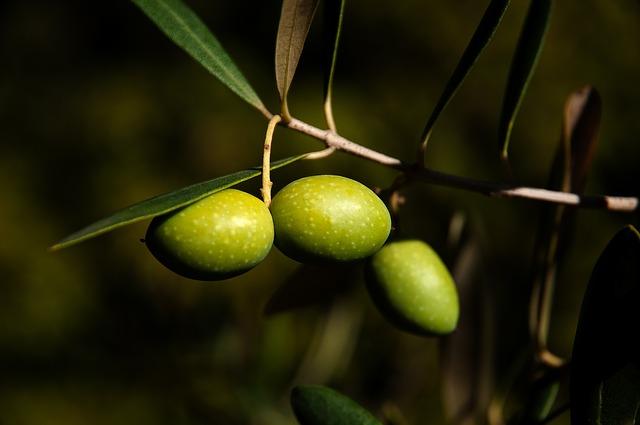 Rempoter un olivier, une astuce déco pour la terrasse ou le balcon