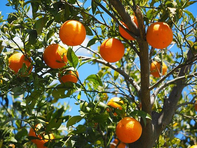 Comment choisir le bon arbre fruitier pour son jardin ?