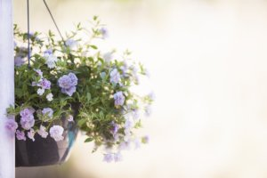 Le Jardinage, un passe-temps qui a de multiples bienfaits