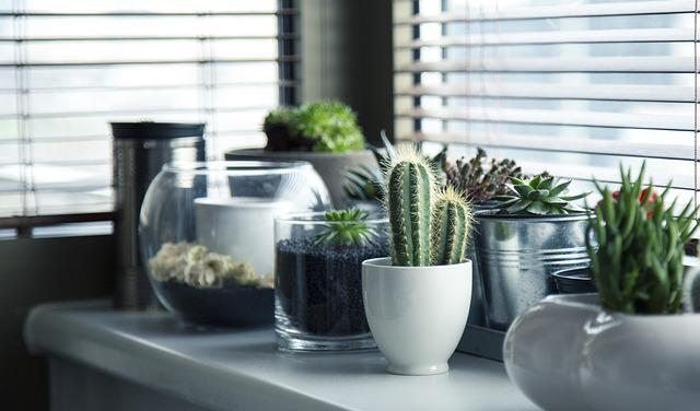Comment bien choisir sa plante d'intérieur ?