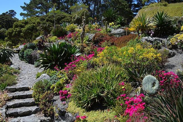 Misez sur le cactus pour avoir un jardin pas comme les autres