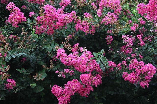Un jardin rayonnant en période de froid avec les fleurs d'hiver