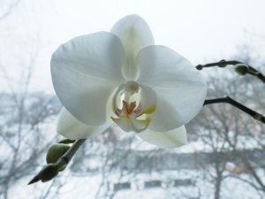 Les Fleurs d'Hiver pour profiter d'un beau jardin en saison froide