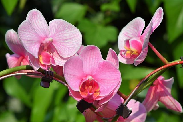 Faites de l'orchidée la star de votre jardin
