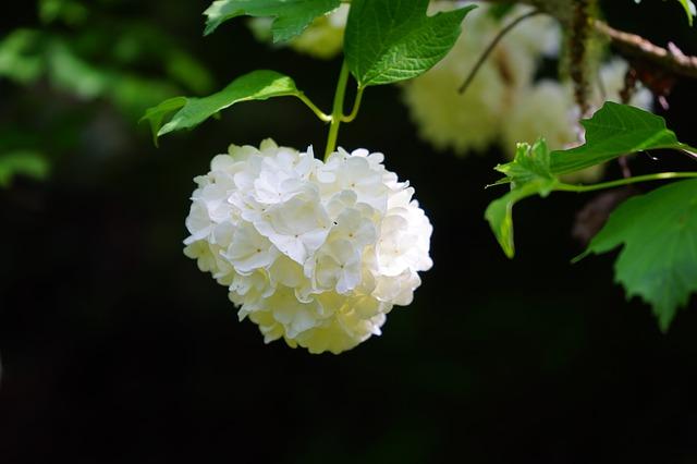 Ornementez votre jardin avec la boule de neige