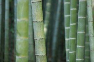 Des barrières anti rhizomes pour bambou