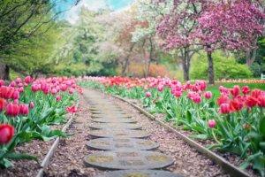 L'Aménagement du Jardin doit être confié à un vrai paysagiste