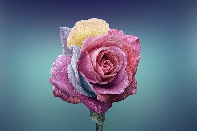 Quelles fleurs offrir en hiver?