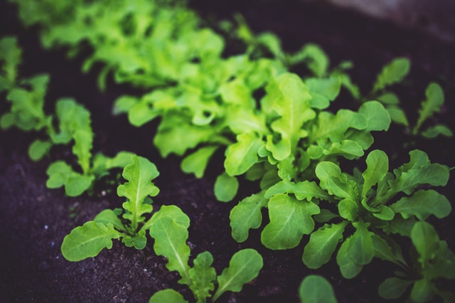 Réaliser un jardin en permaculture