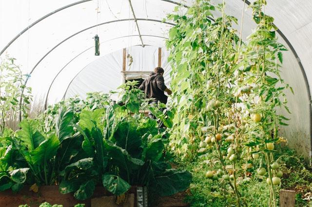 Et si vous cultiviez vos plantes sous serre ?
