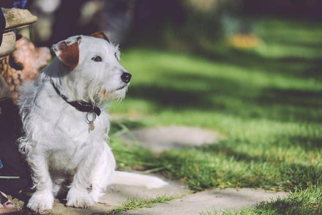Décoration de la niche de votre chien