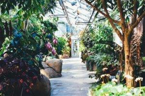 Une serre de jardin permet de cultiver facilement la majorité des légumes