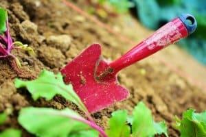 Il suffit de quelques petits gestes afin d'obtenir une bouture plante grasse
