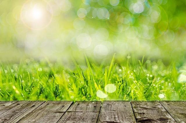 Se débarrasser des mauvaises herbes avec du désherbant maison