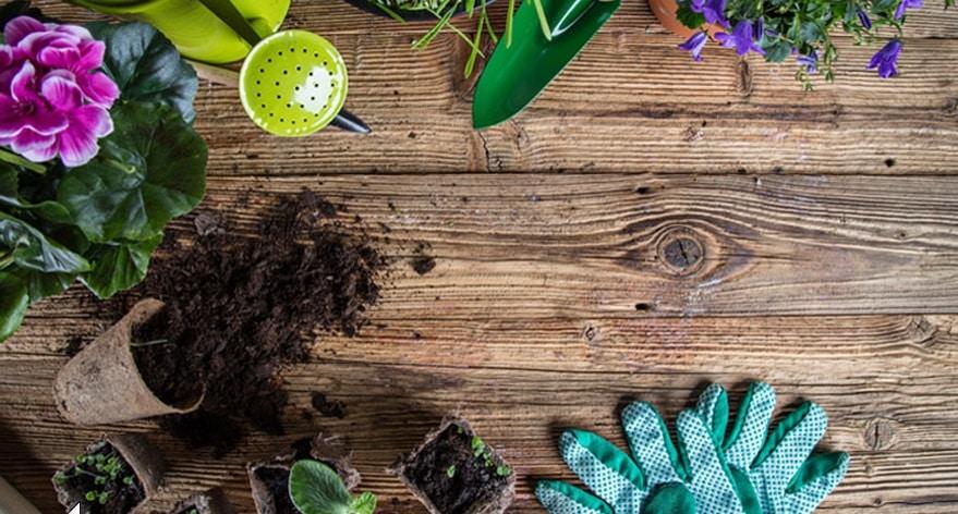 Aménagement du jardin : 5 conseils avant de se lancer.