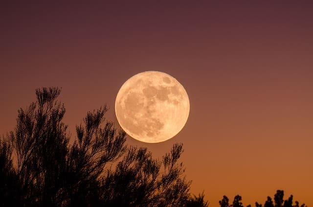 Jardiner selon le calendrier lunaire