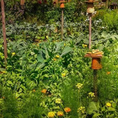 Le Jardin de la permaculture, c'est la base de l'écologie