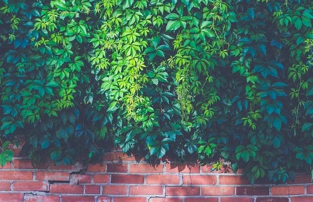 Mur de plantes pour un jardin écolo-design