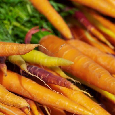 légumes faciles à planter