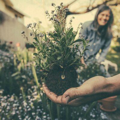 Garder son jardin en parfait état
