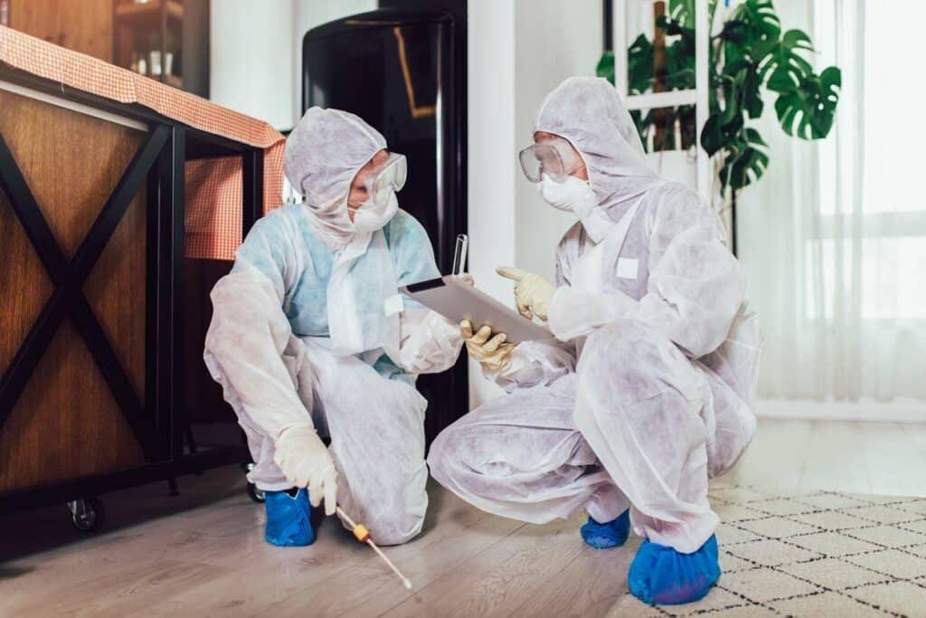 entreprise de désinfection punaises de lit