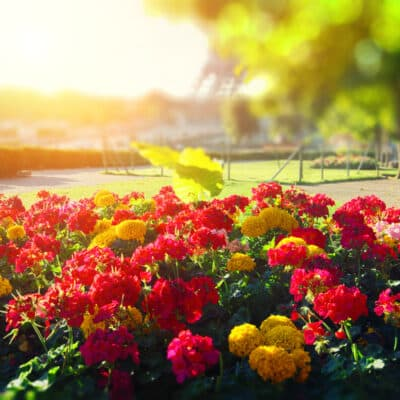 comment créer un beau massif fleuri