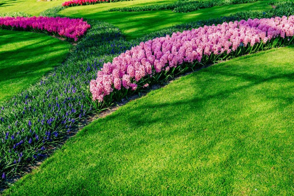 comment créer un massif fleuriplantez vos fleurs